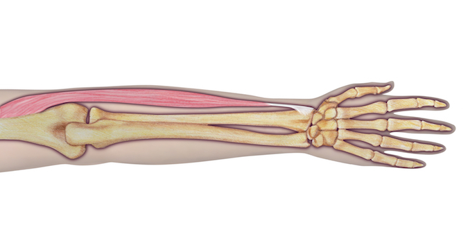 Muscle Test: Brachioradialis | Hand Surgery Source