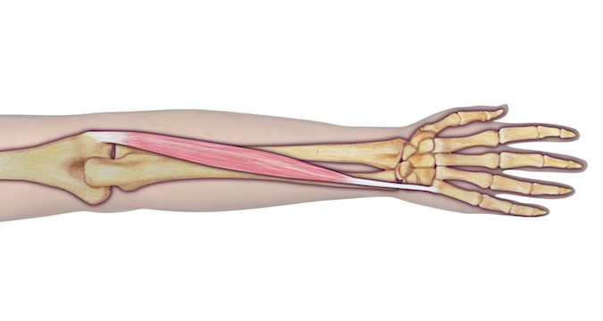 manual muscle test extensor carpi ulnaris